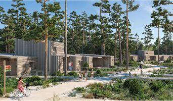 Photo du Résidence « Les Landes de Gascogne » programme immobilier neuf à Pindères